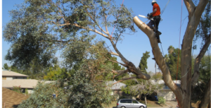 Emergency Tree Removal Services