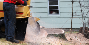 Stump Gringing - DFW Tree Services