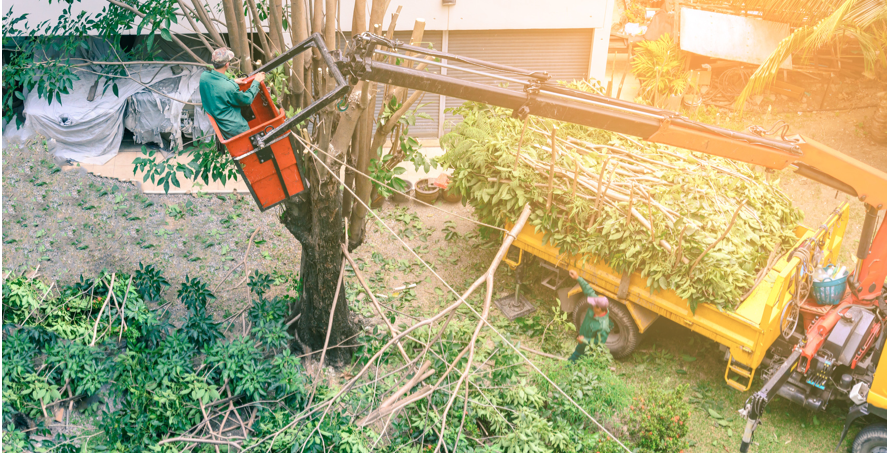 Tree Trimming - DFW Tree Services