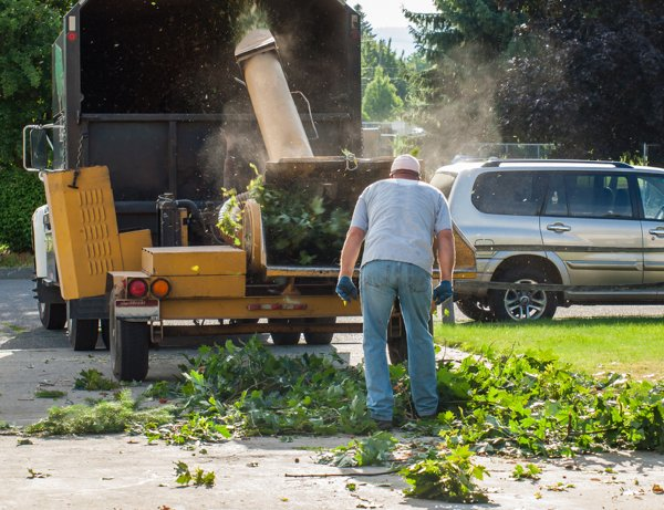 dfw tree services