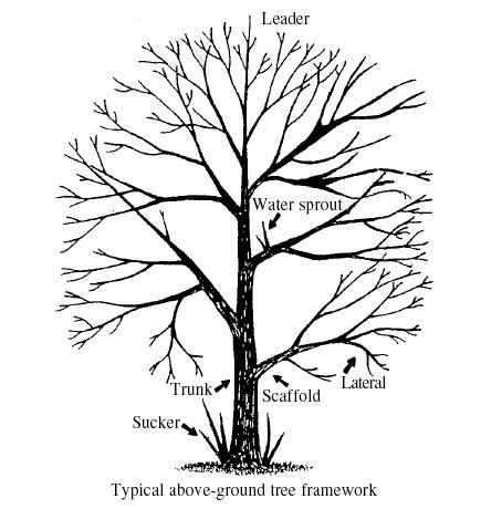 Tree Branch Illustration